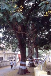 Allee in Pondicherry